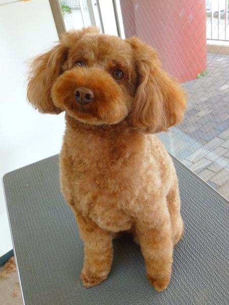 シャンプー&カットコース 小型犬 犬種別料金表