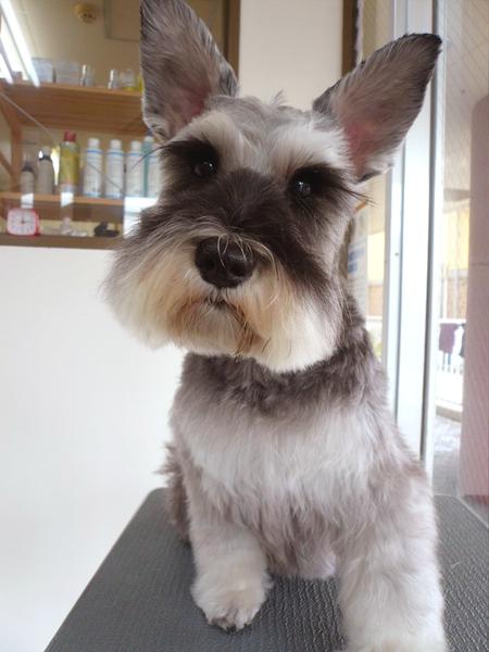 シャンプー&カットコース 中型犬 犬種別料金表